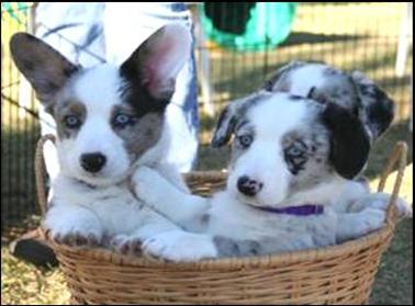 Quincy Pups