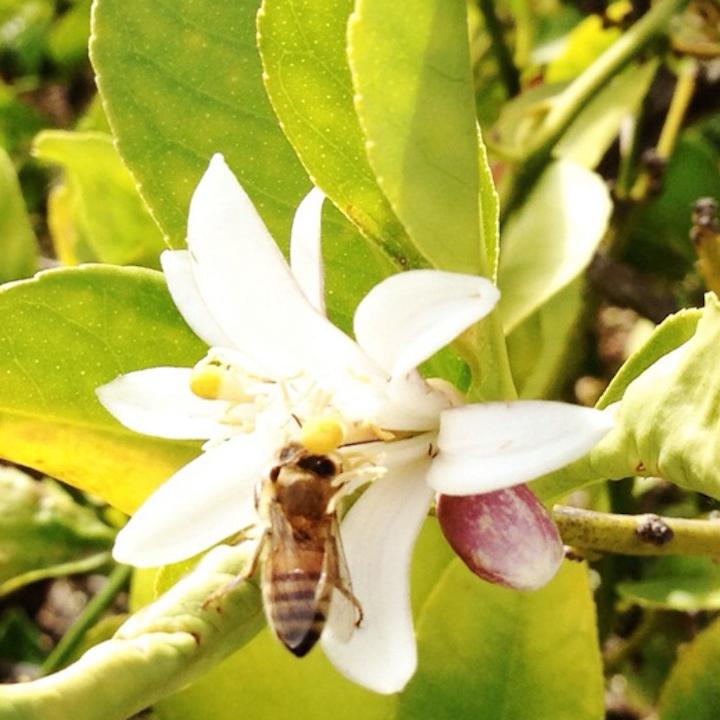 Helping Bees.jpg