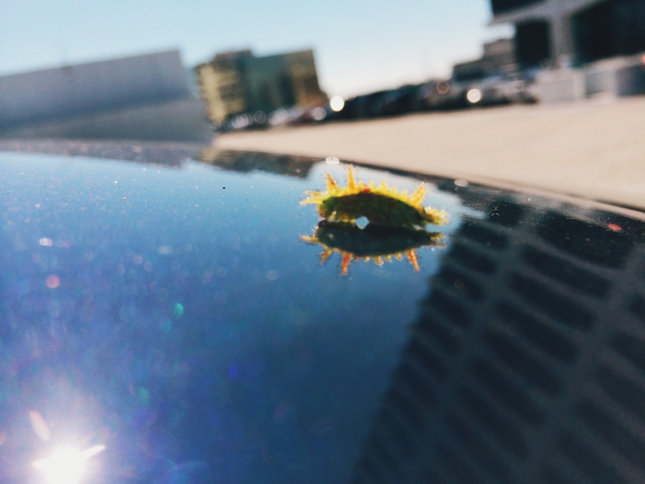 there was a pal on my car earlier today…