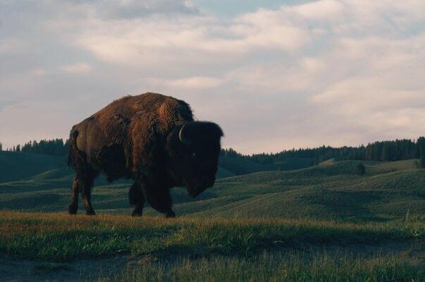 #fbf Yellowstone | 2008