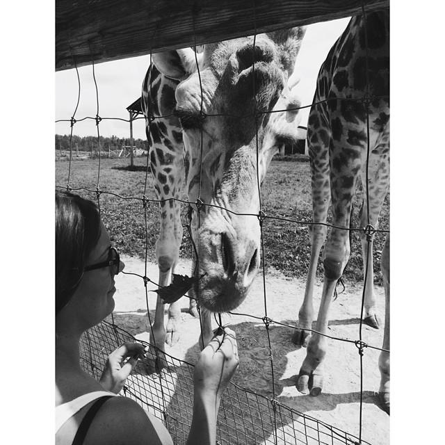 Raven made some new pals too. #latergram #canada #elmvale #junglezoo #zoo #giraffe #pals #tripwastooshort