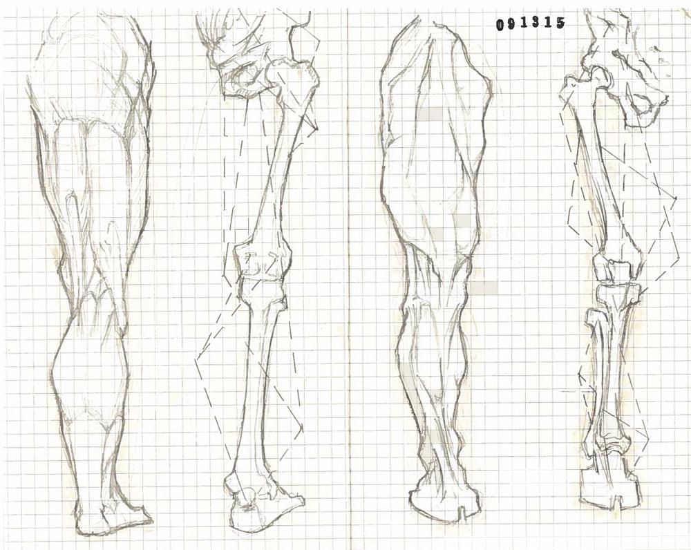 Legs 1.jpg