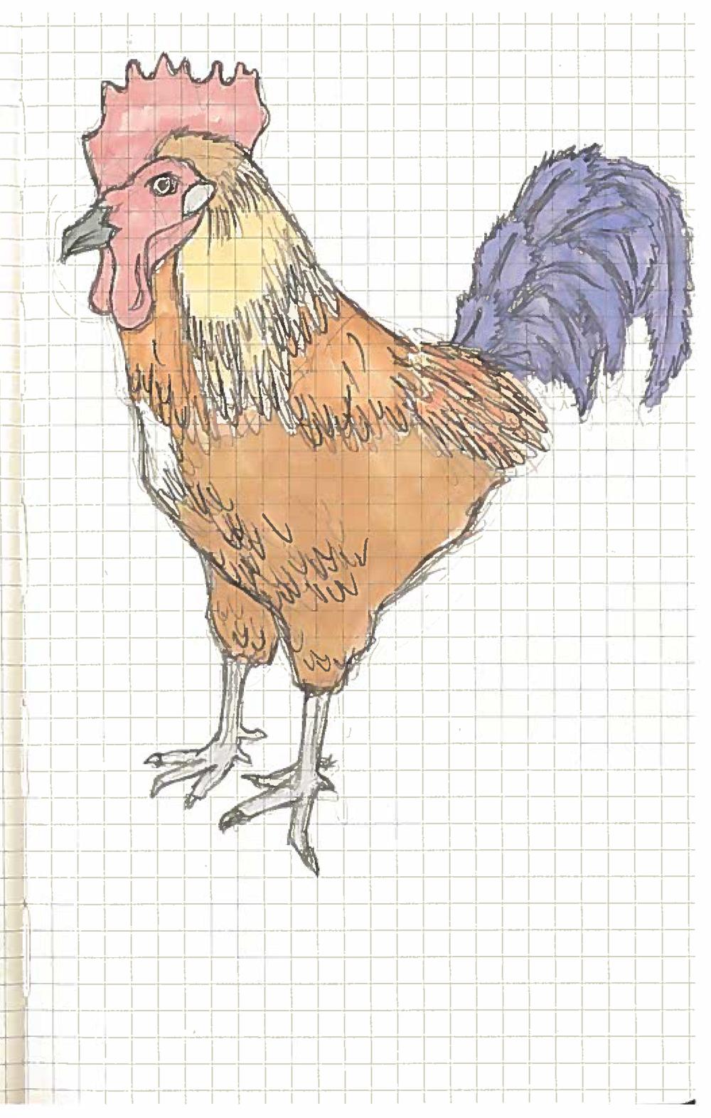 Rooster 1.jpg