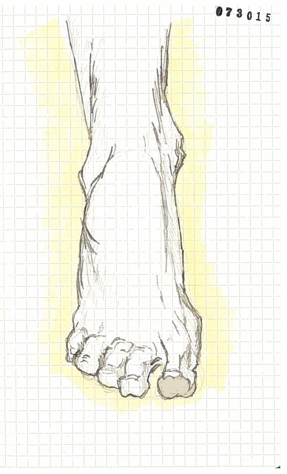 Foot 1.jpg