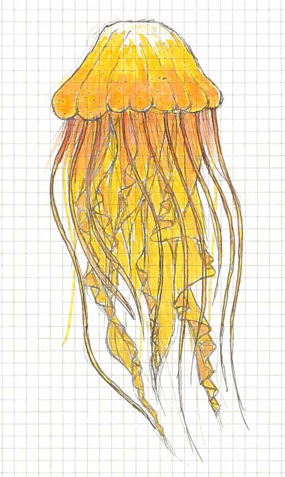 Jellyfish2.jpg