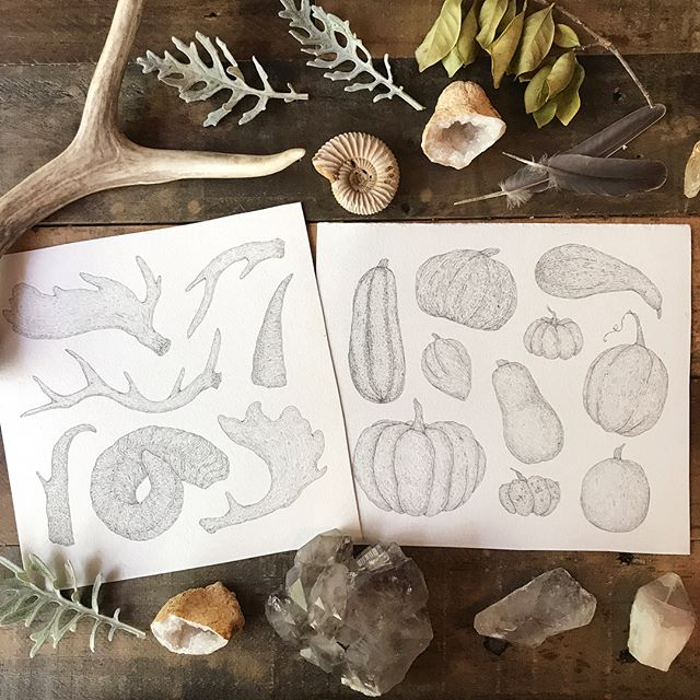 Pages for my 2018 calendar in progress! Antlers and gourds, two of my favorite things to draw.