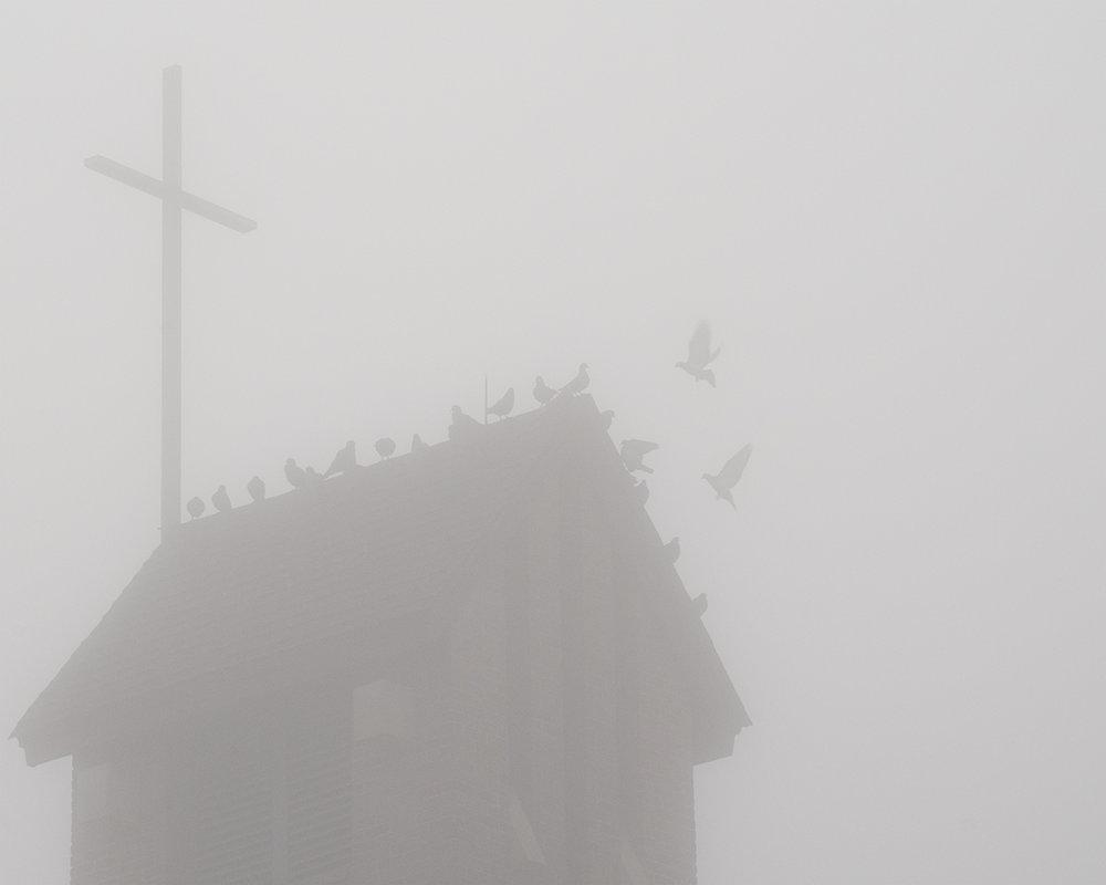 the flock.jpg