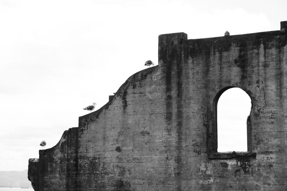 Gulls in a row - alcatraz.jpg
