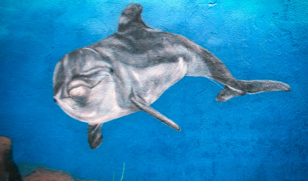 dolphin painted by muralist in bay area.jpeg