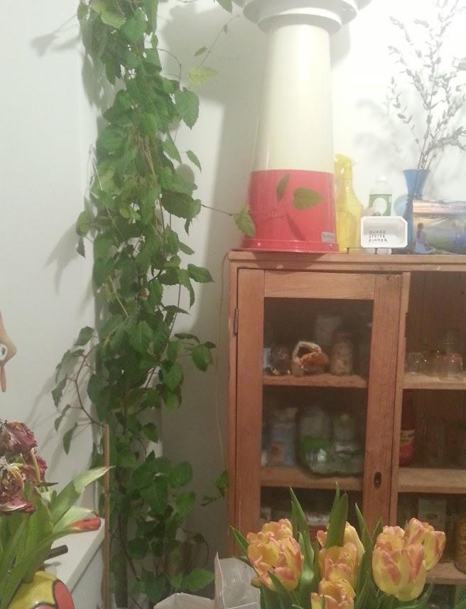 """Las plantas, los productos """"bio"""" y los carteleitos son otros elementos del mundo-Brigit"""