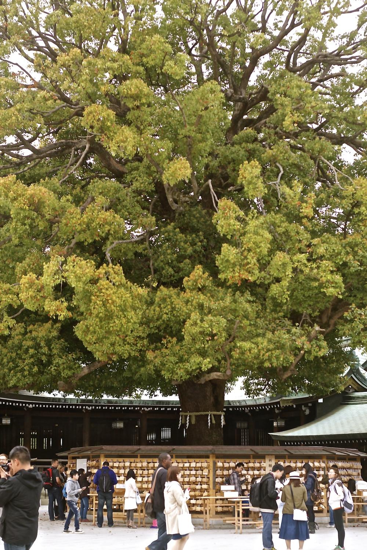 """Árbol y un multiple choice para elegir tu deseo. Sobre las mesas, los transeúntes encuentran papeles nopara escribir un deseo personalizado, sino para tildar el favorito de la lista. """"Seguridad vial"""" y """"crecimiento del cabello"""" estaban entre las opciones. Tokyo, Japón - Abril 2015"""