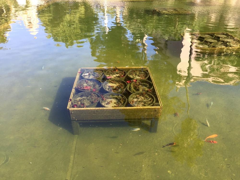 Mesa con peces bajo el agua. San Diego, CA, EEUU.Febrero 2016