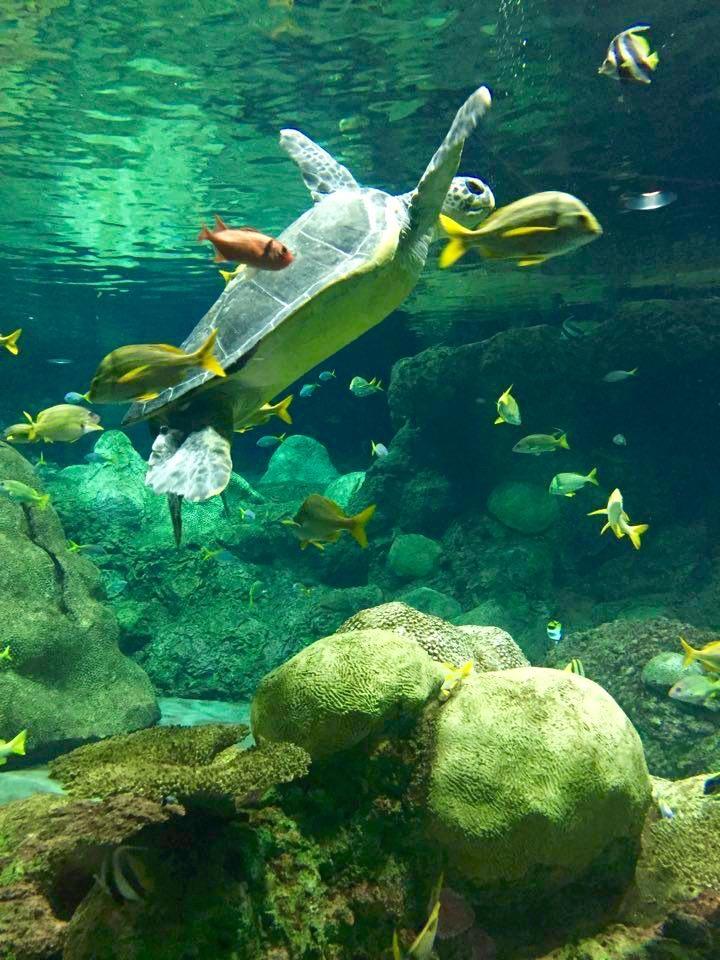 Arrecife de tortugas y otros animales sin caparazones. San Diego, CA, EEUU.Febrero 2016