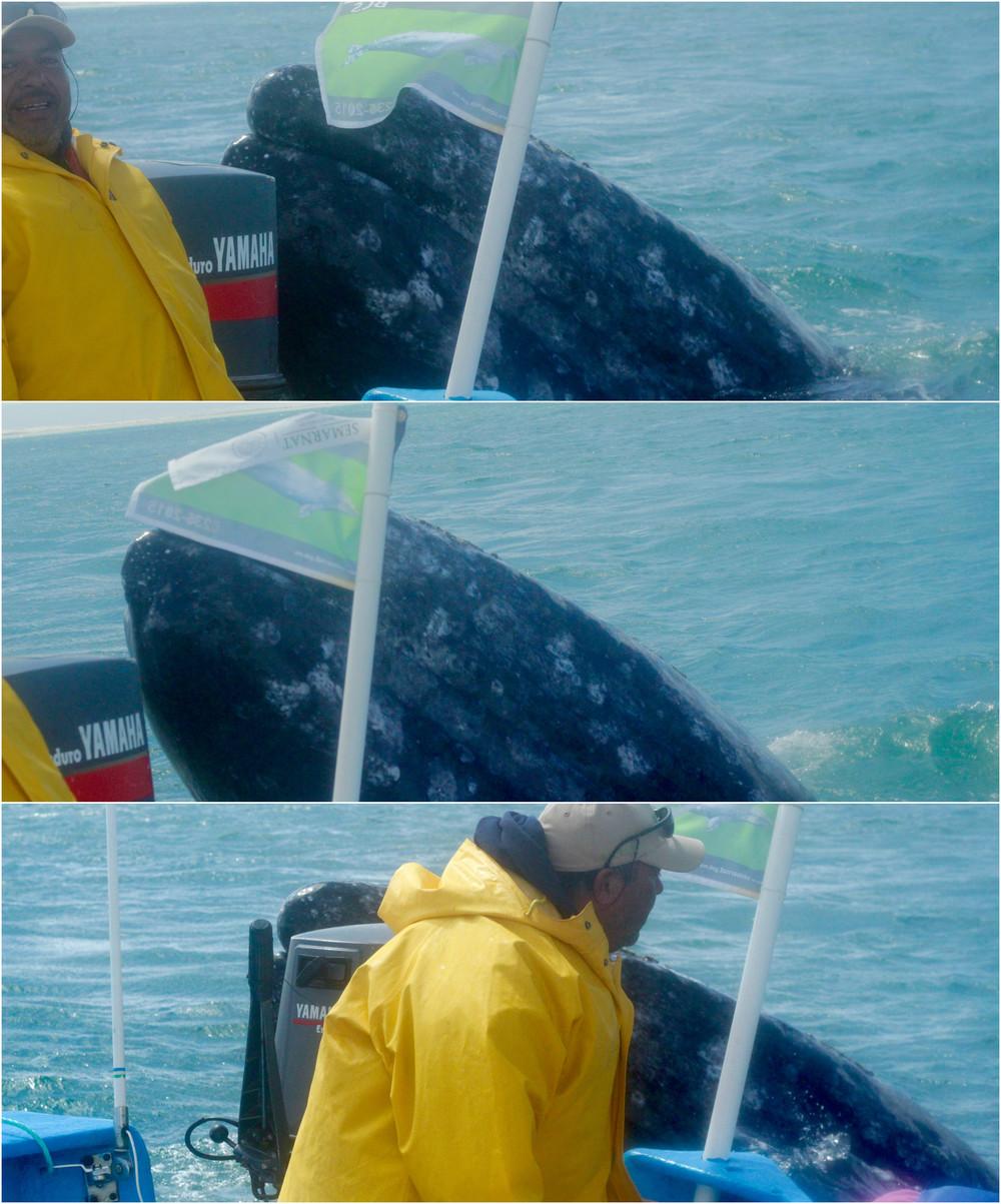 Asoma la ballena. Guerrero Negro, México - Marzo 2016