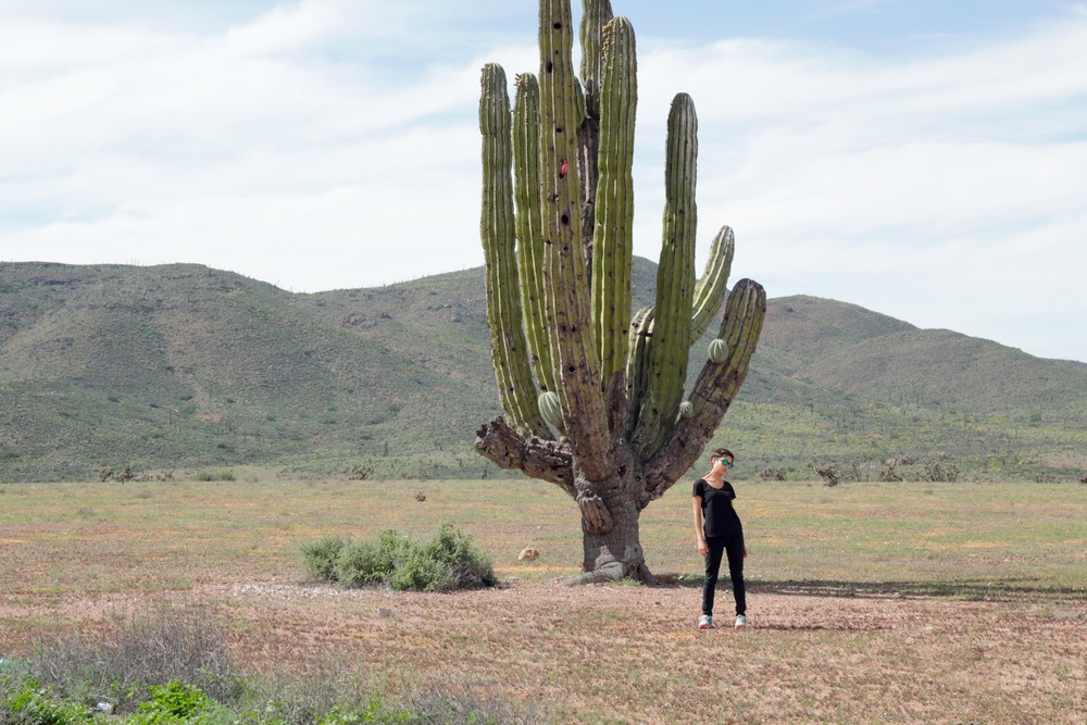 Pose nopal. Baja California, México - Marzo 2016