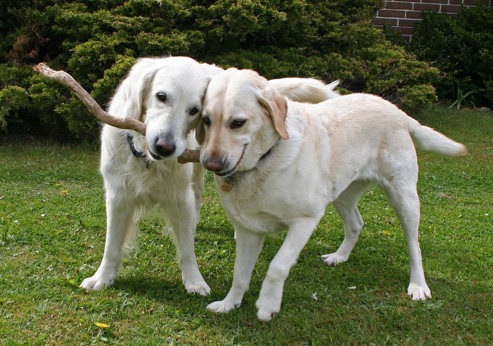 The fact that both dogs want the stick makes it more valuable. I kinda want it too now...