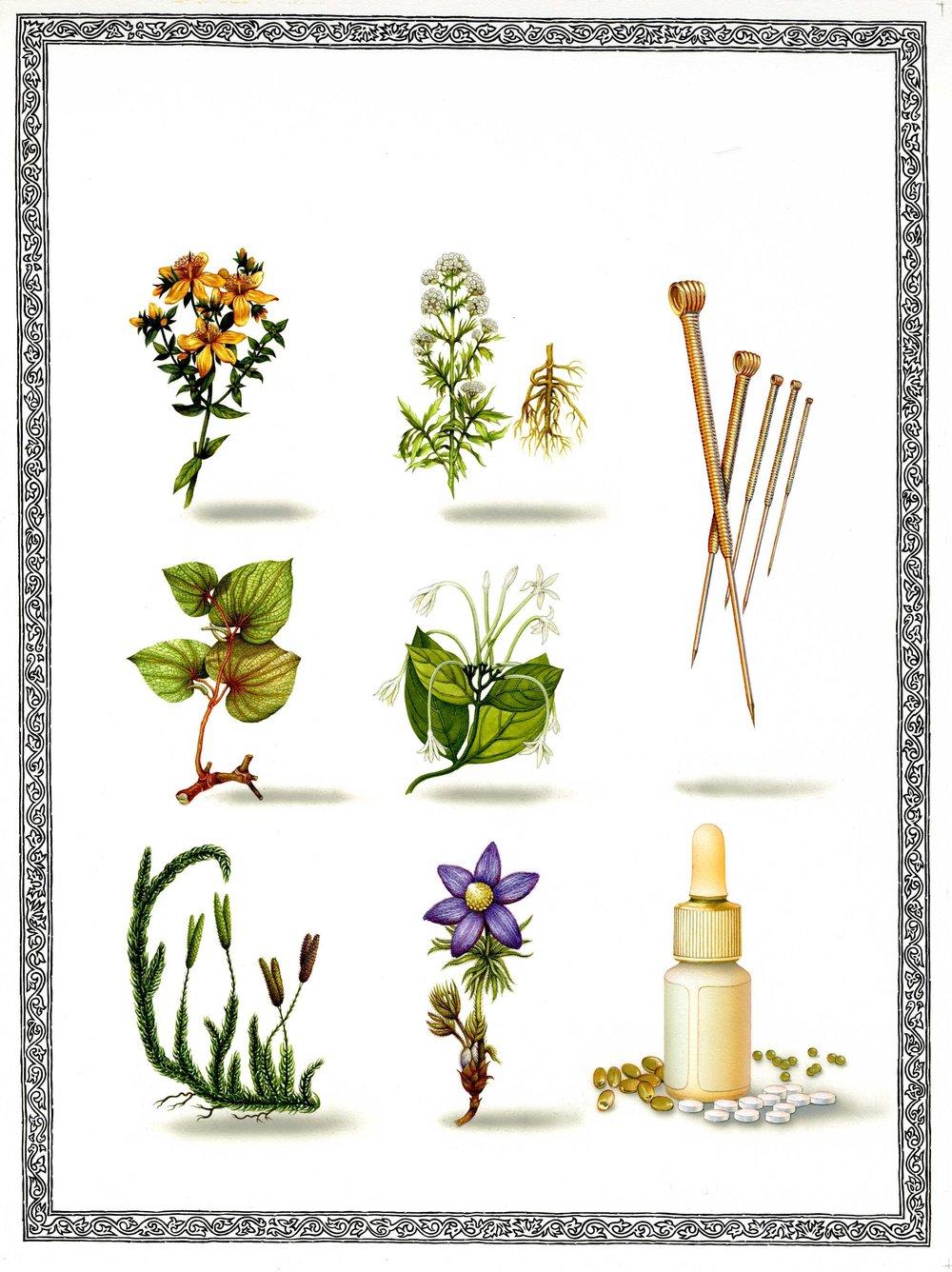 300 Herbs.jpg