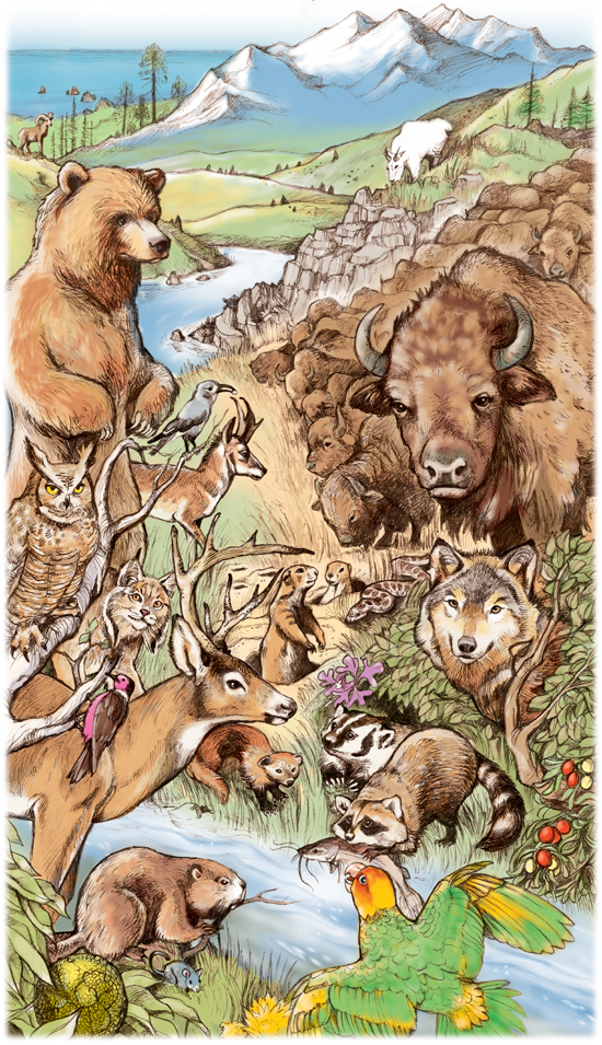 Lewis&Clark animals.jpg