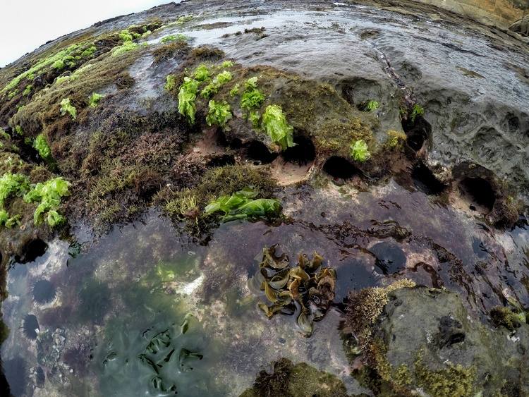 Montanita Ecuador The Point GoPro Beach Seaweed