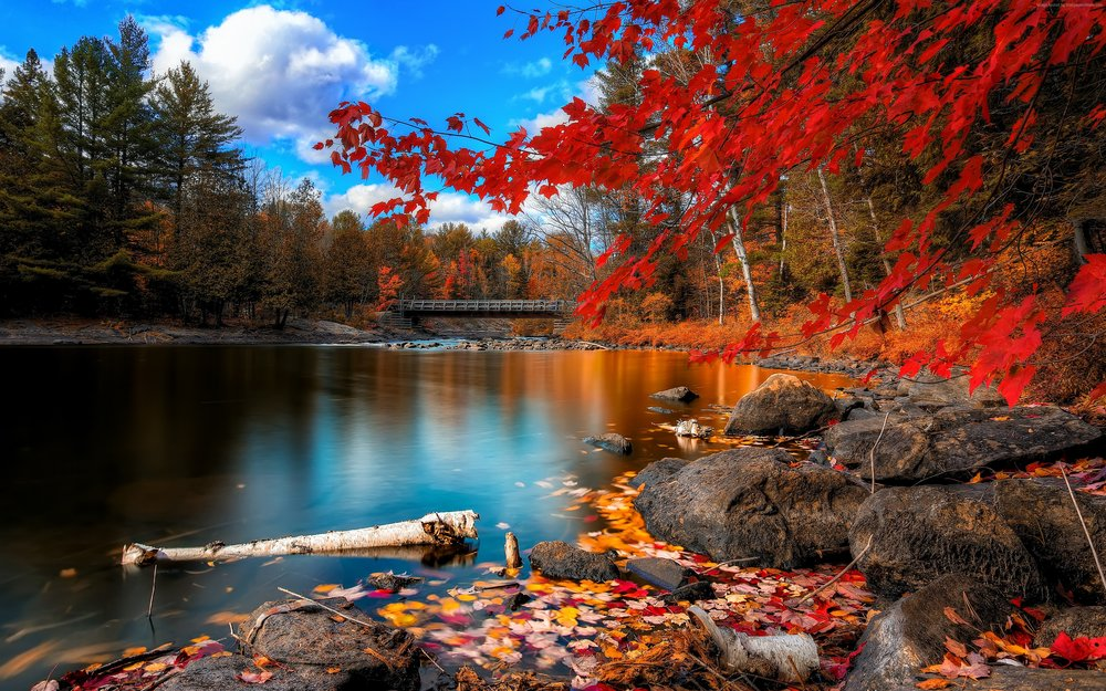 autumn-forest-3840x2400-4k-hd-wallpaper-leaves-trees-lake-rocks-beach-578.jpg