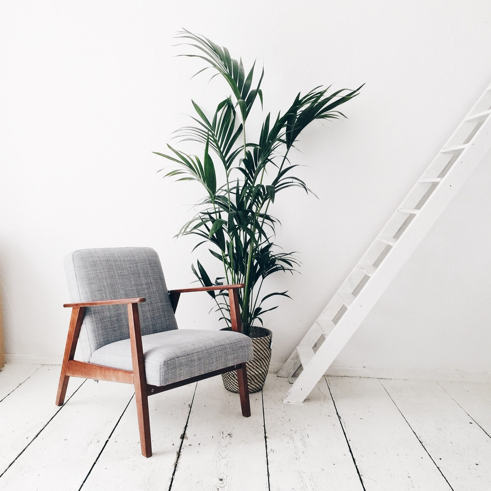 the studio plants all over herz und blut. Black Bedroom Furniture Sets. Home Design Ideas