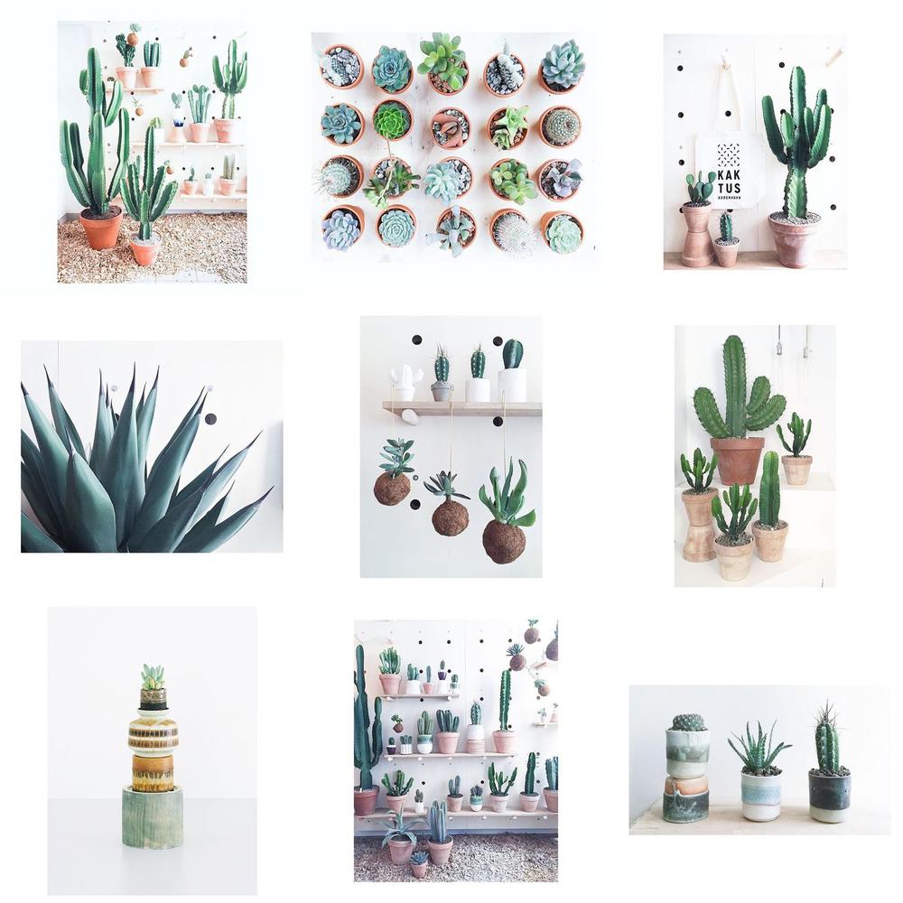 InstaCrush #kaktus