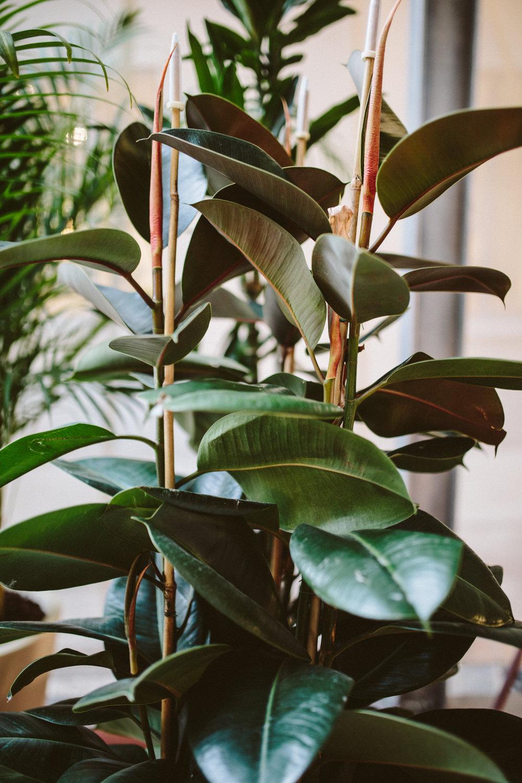 Die Küche der Ort des Zusammenseins ist die Base, der Eingang und gemeinschaftlicher Ort, das kennt man ja aus den eigenen vier Wände zu gut. Durch die gesamte Installation führt eine Wendeltreppe als roter Faden durch die vier Stockwerke. Durch das Auffangen des Regenwassers ist eine ökologische Wasserzuvor ebenfalls bedacht und es entsteht ein aktives Ökosystem im Haus, das die Ressourcen Wasser, Luft und Licht in allen Einzelheiten miteinbezieht. Das Außengewebe beispielsweise Filtert die Luft von außen und die Pflanzen auf dem Rooftop sind spezielle ausgewählte Sauerstoffproduzenten. Die Struktur des ganzen Hauses ist zudem mobil und überall wieder aufbaubar und passend zu unterschiedlichen Klimabedingungen unterschiedlich bespannbar. Da kann der Karavan der urbanen Nomaden einpacken.