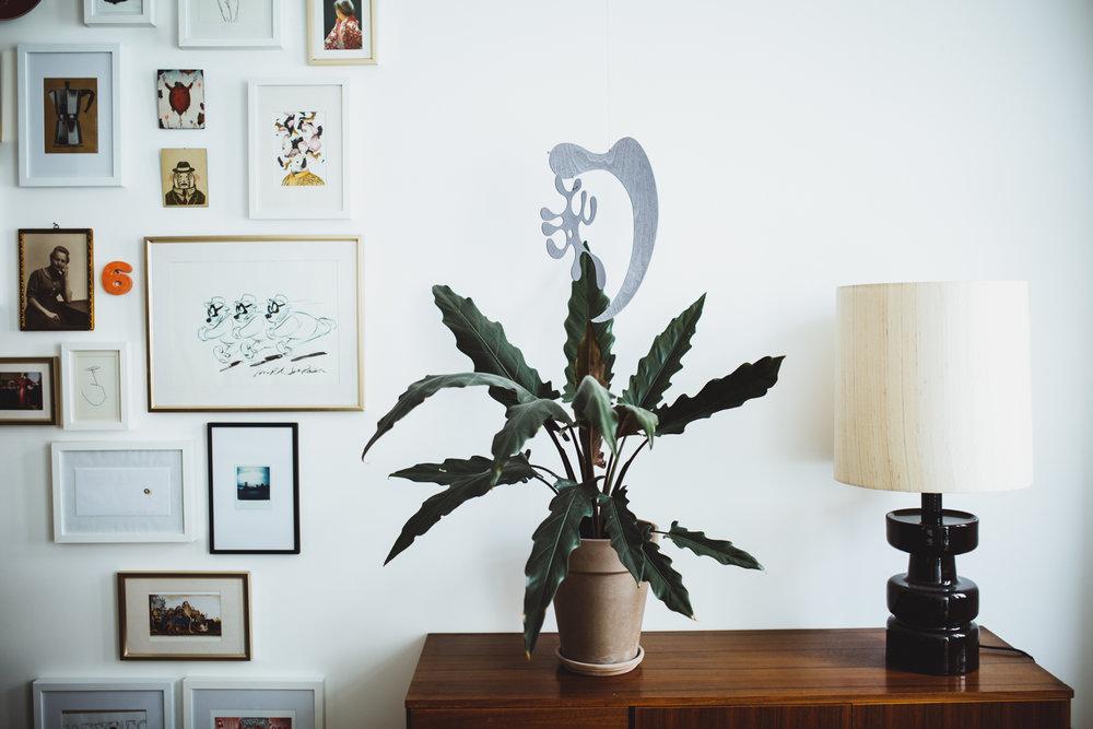 Zimmerpflanze des Monats: Pfeilblatt