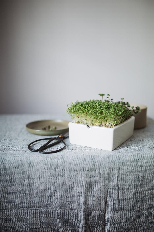 Brotzeit mit Microgreens - Heimgart