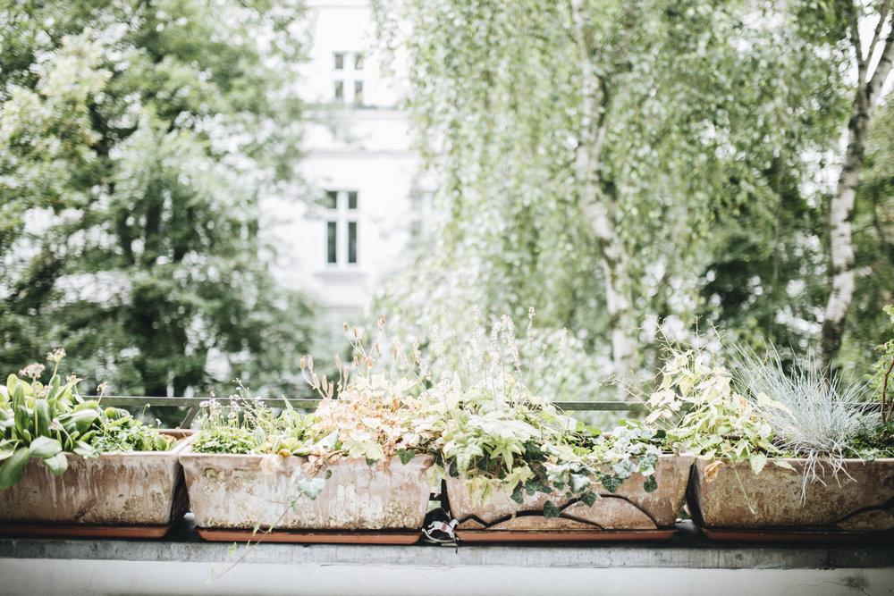 Plantstory Judith Springer