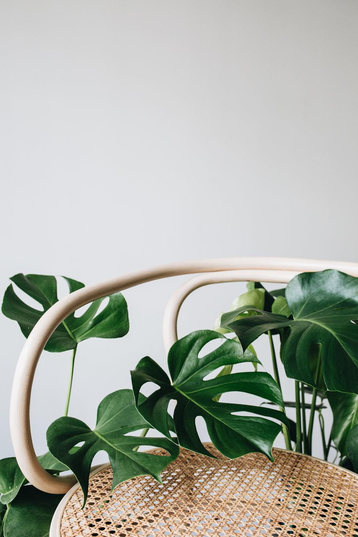 Zimmerpflanzen des Monats 2019 Herz&Blut
