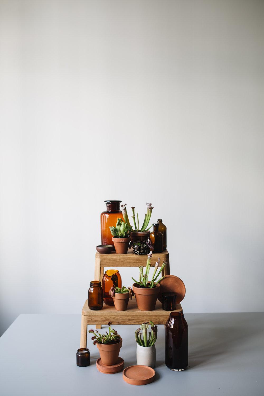 Fleischfressende Pflanzen .jpg