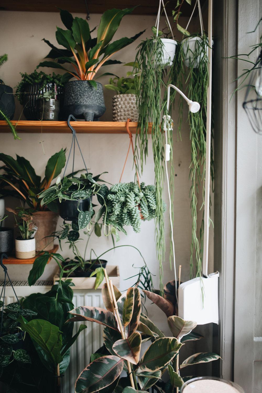 Plant Circle + DIY (63 von 213).jpg