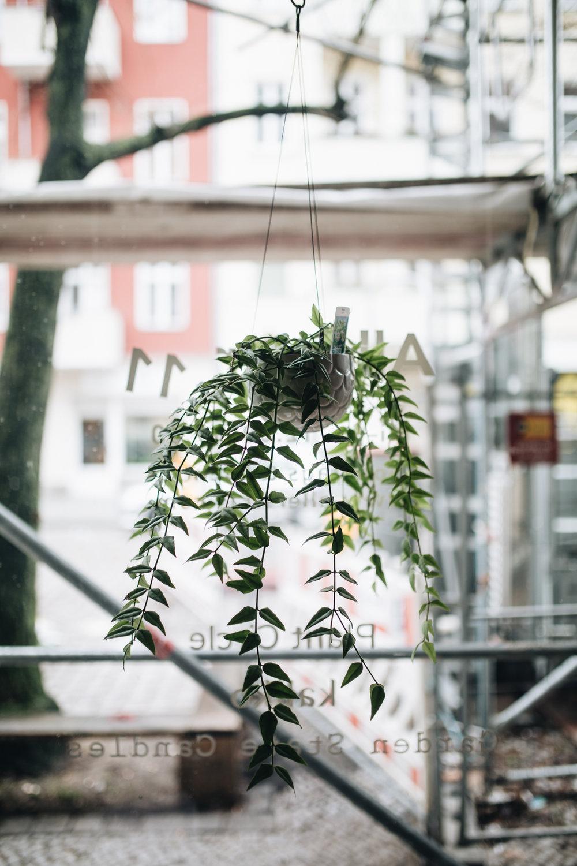 Plant Circle + DIY (66 von 213).jpg