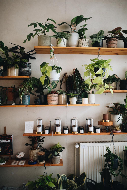 Zu Besuch im Plant Circle Store