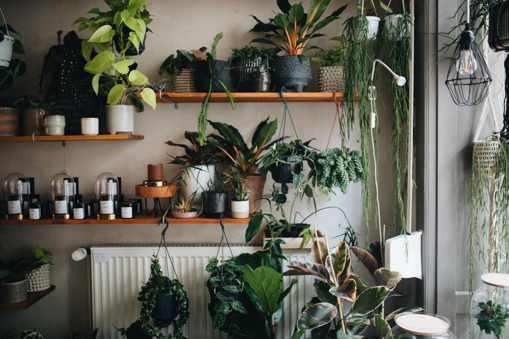 Plant Circle + DIY (62 von 213).jpg