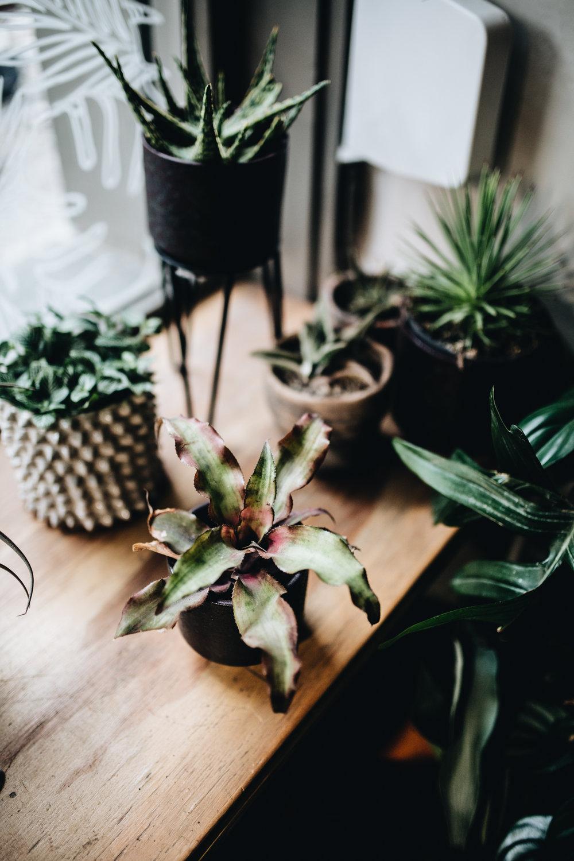 Plant Circle + DIY (100 von 213).jpg