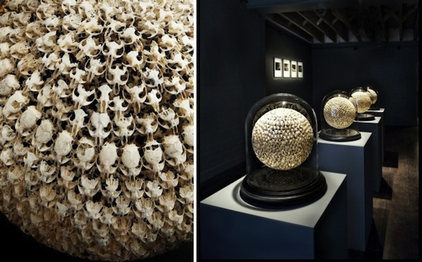 Alastair Mackie -Spheres from Mouse Skulls     Pin It