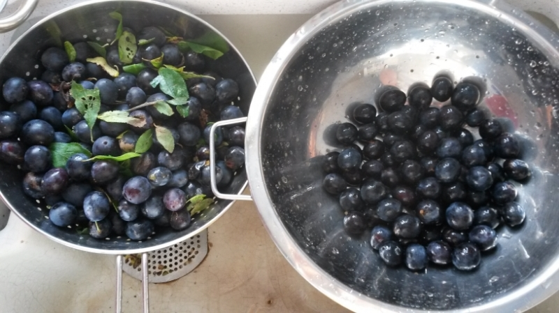 Damsons and plums.jpg