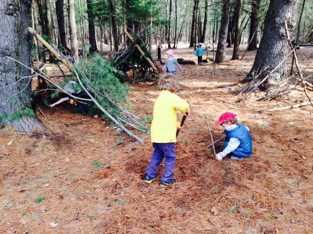 "Clearing away the pine needles in order to ""grow plants""."