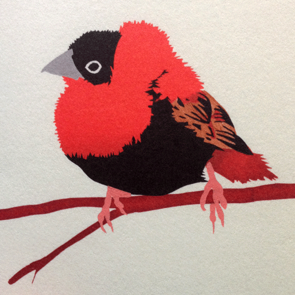 Beautiful Orange Bishop birdy by Jill