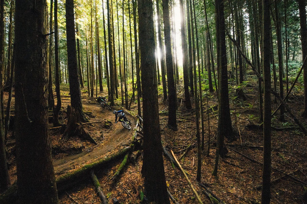 I did not take this gorgeous photo of the forest in Bellingham but I will be there in September!
