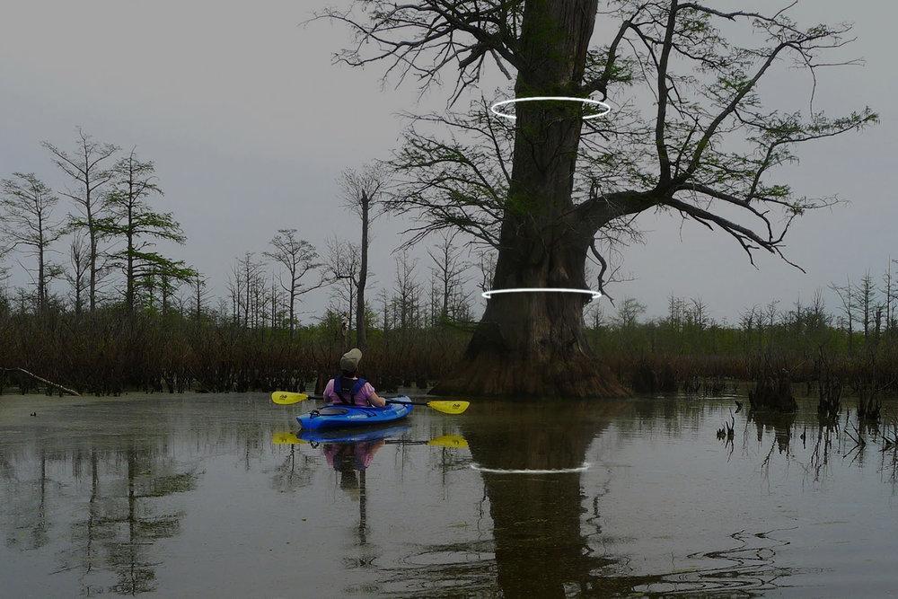 004 cache river cypress.jpg