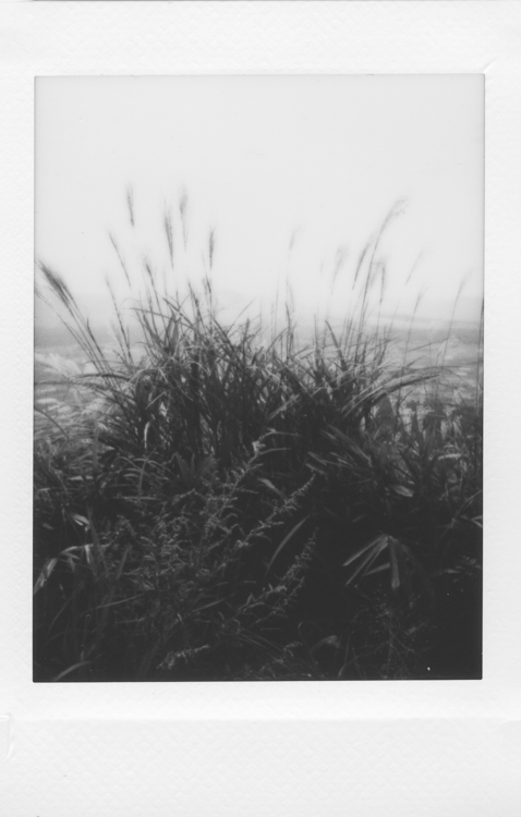 Grasslands, Aso-San, made with a Fuji Instax Mini 90S