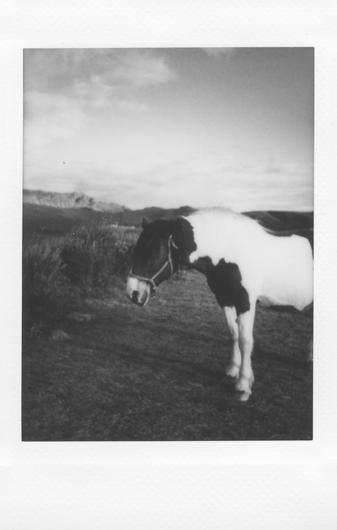 Evil horse (as they all are), Aso-San , made with a Fuji Instax Mini 90S