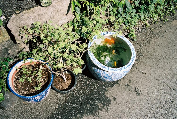 Goldfish bowl, Kumamoto