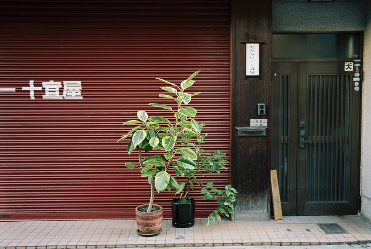 Plant life, Kyoto