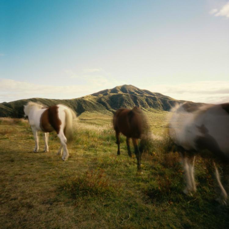 Horses, Kusasenri, Kumamoto prefecture