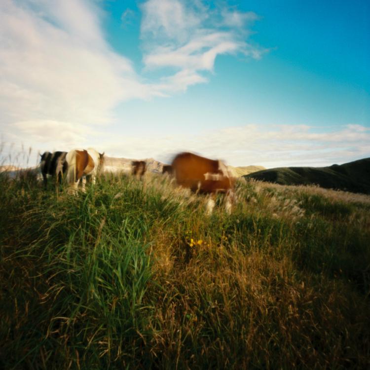 More horses, Kusasenri, Kumamoto prefecture