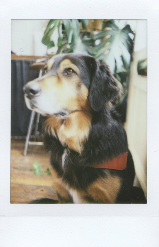 Kimbie Pup - Mint TL70